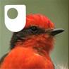 Open_university-galapagos