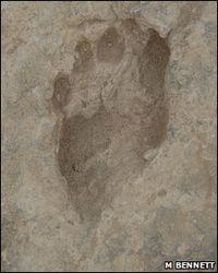 Bennett-Homo_erectus_footprint