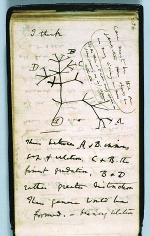 Darwin_notebook_tree_sketch