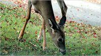 Topics_deer_sub_glover
