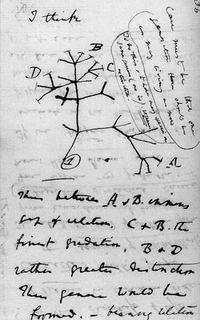 Darwin_tree_lg