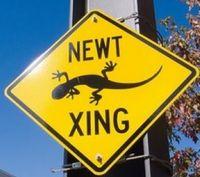 Newt Crossing 1