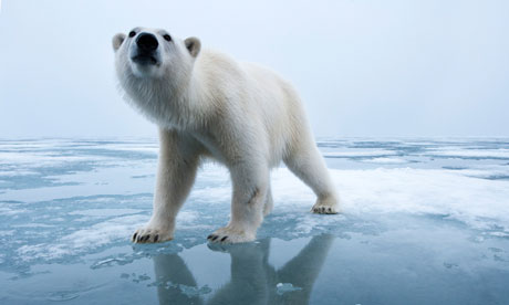 Polar-Bear-on-ice-007