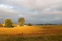 North of Garrison, Iowa -- Thomas Payne. North of Garrison, Iowa -- Thomas Payne
