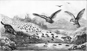 Lemmings in Migration in Popular Science Monthly Vol 11 1877