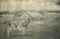 Elm_farm_ollie_thalinger