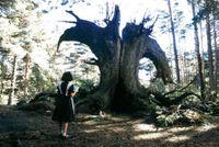 Pans_labyrinthtree_1