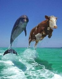 Dolphin_and_cow